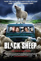 One Sheet for Black Sheep